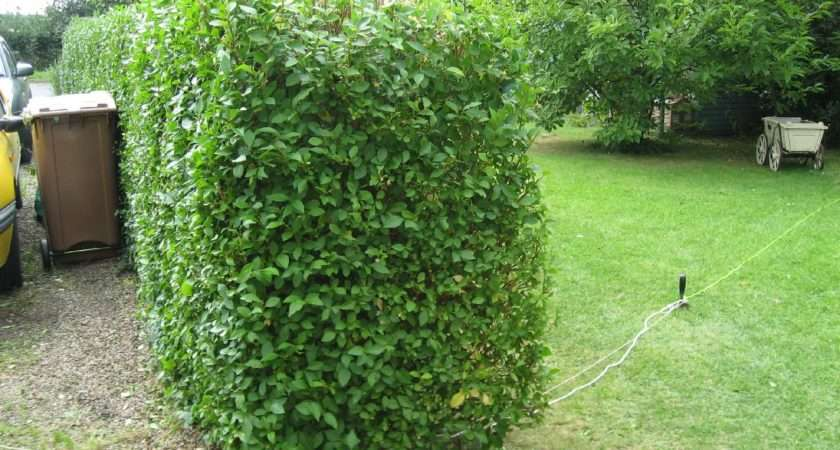 After Tidy Put All Those Hedge Clippings