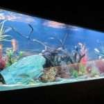 Awesome Tank Built Into Your Wall Inside
