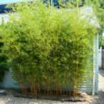Bamboo Landscaping Designs Ideas Gardening