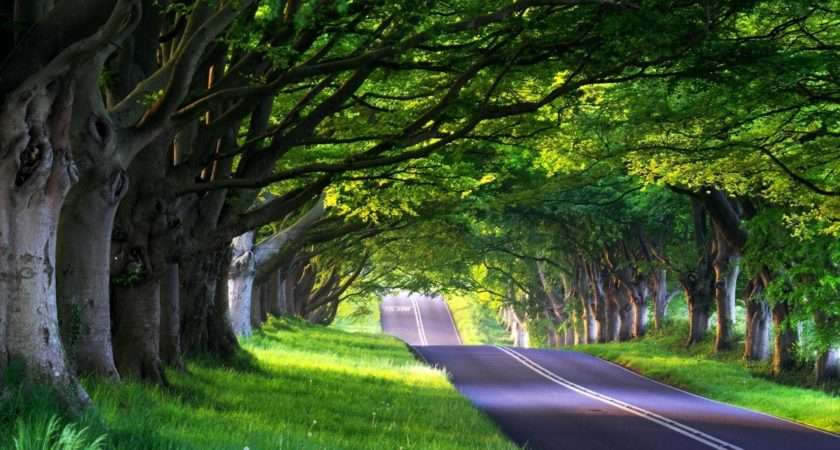 Beautiful Natural Trees Collection