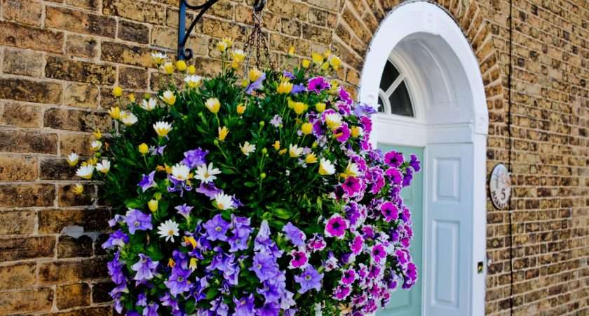 Best Flowers Hanging Baskets