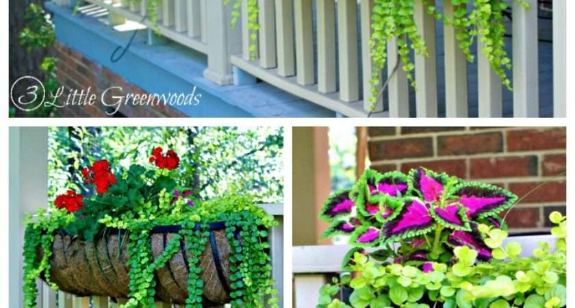 Best Plants Hanging Baskets Front Porches