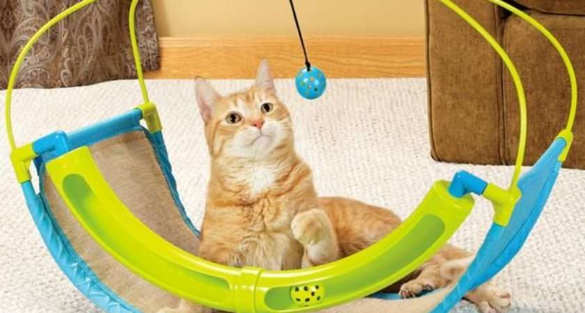 Best Toys Playful Cats Diynetwork Decorating