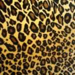 Brown Leopard Print Colorful Animal