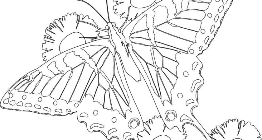 Butterfly Flower Coloring Pages Print