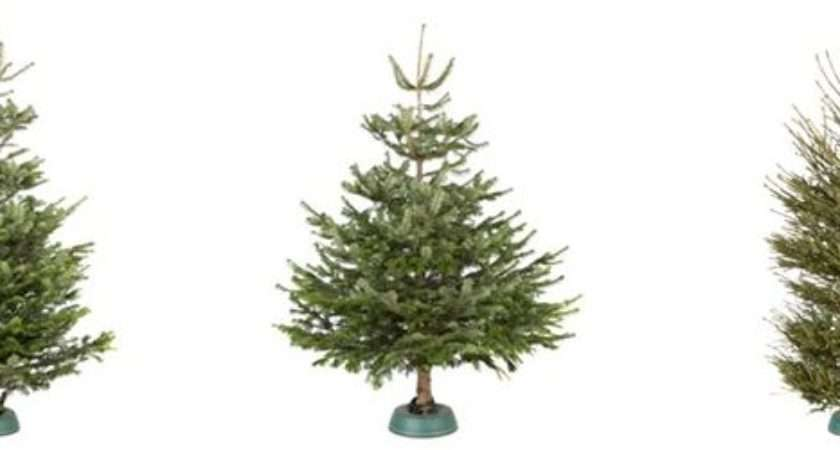 Care Your Real Christmas Tree Help Ideas Diy