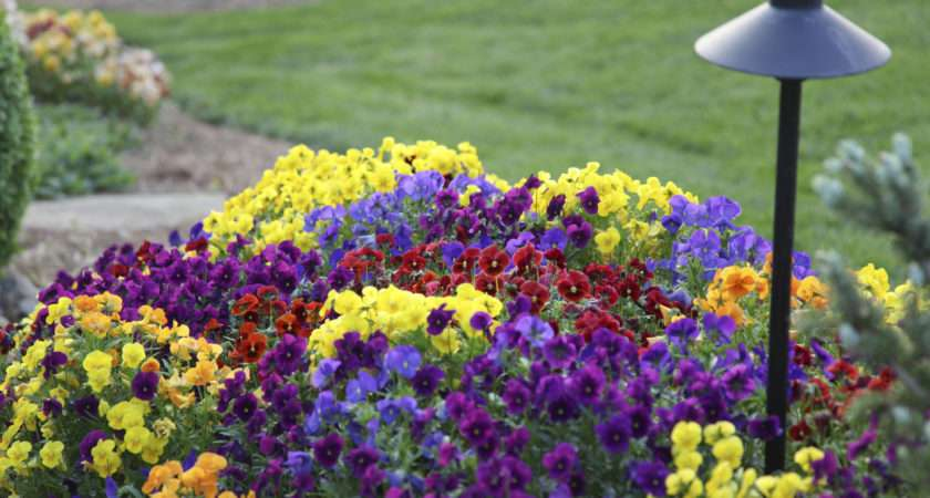Choosing Annual Flowers Tips Growing Gardens