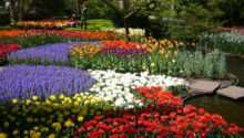 Colorful Keukenhof Gardens Holland World Travel