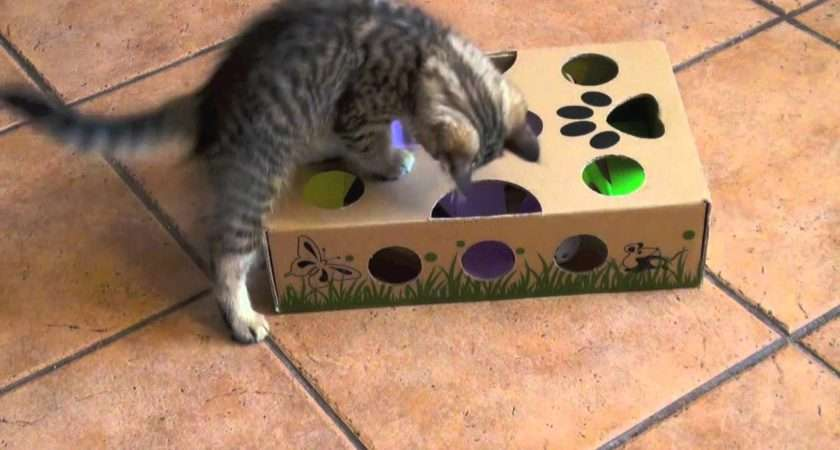 Cutest Kitten Ever Playing Catamazing Best Cat Toy