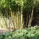 Extraordinary Bamboo Garden Ideas Digital Photograph