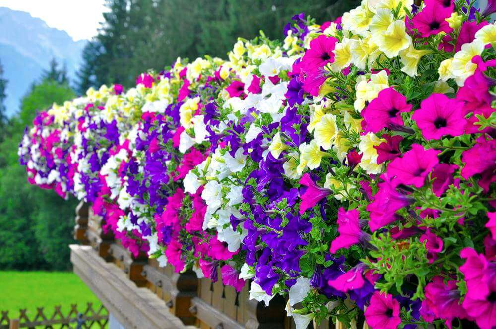 Flower Pots Containing Purple White Yellow Pink Flowers