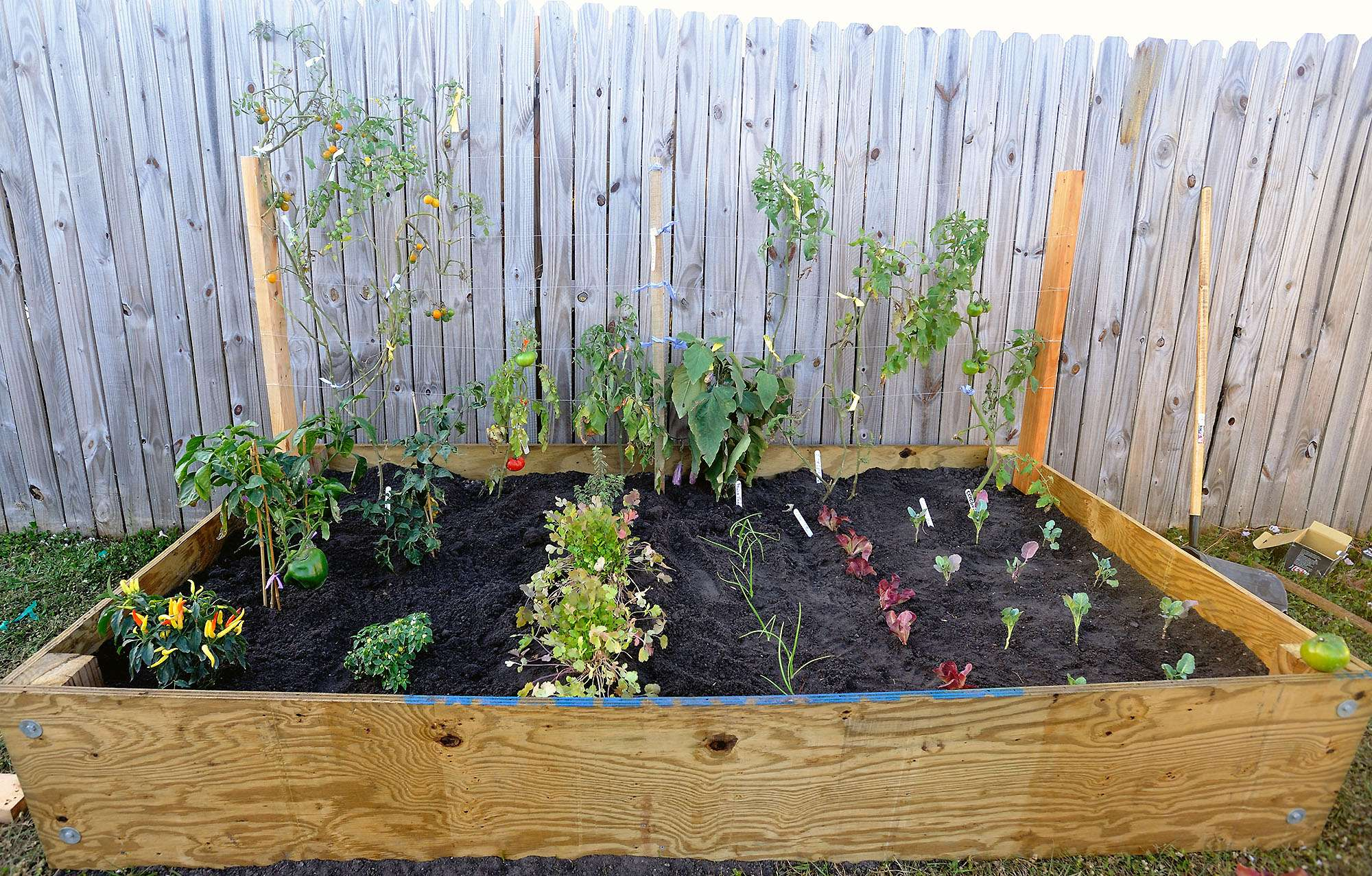 Fully Planted Ready Produce Raised Backyard Vegetable Garden