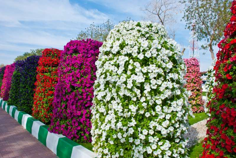 Guinness World Record Having Largest Number Hanging Flower Baskets