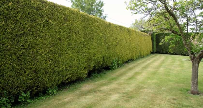Hedge Trimming Reductions Wiltshire Bath Landscaping