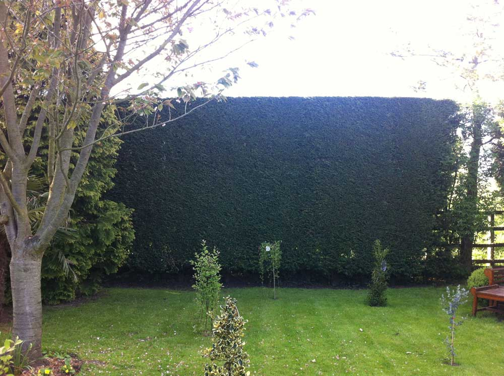 Hedge Trimming Sky Gardens