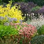 Herbaceous Borders Frustrated Gardener