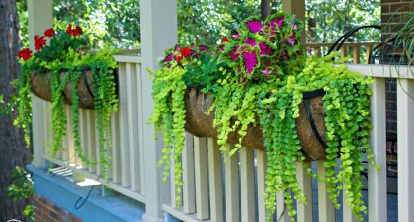Hometalk Best Plants Hanging Baskets