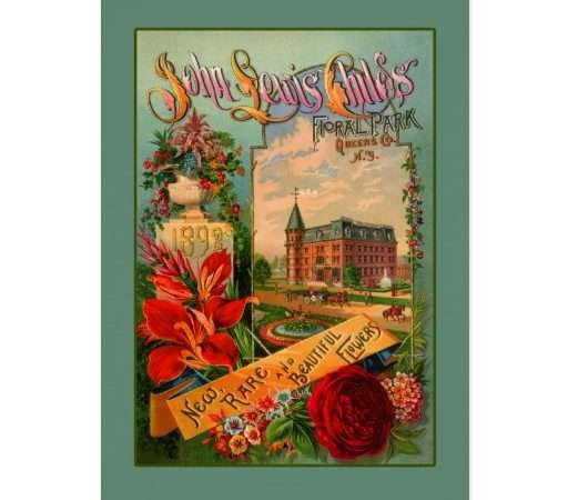John Lewis Childs Horticulture Art Greeting Card Zazzle