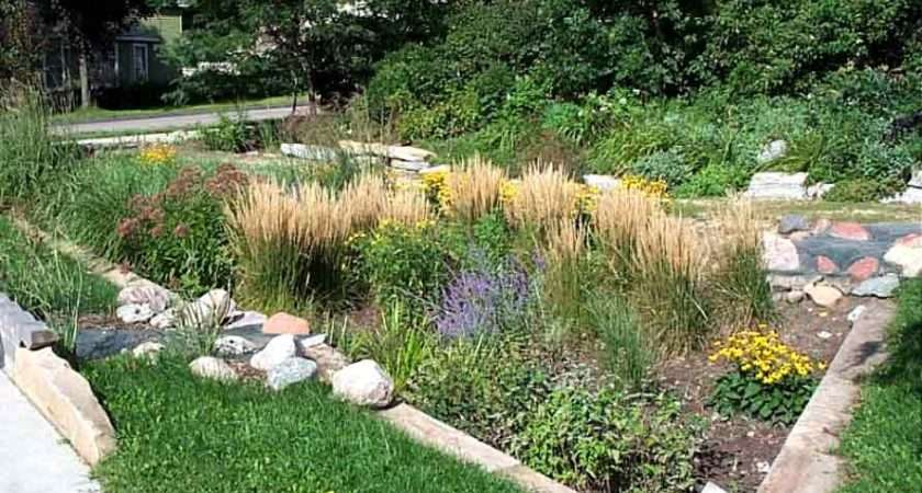 Leading Cause Water Pollution Though Your Own Rain Garden