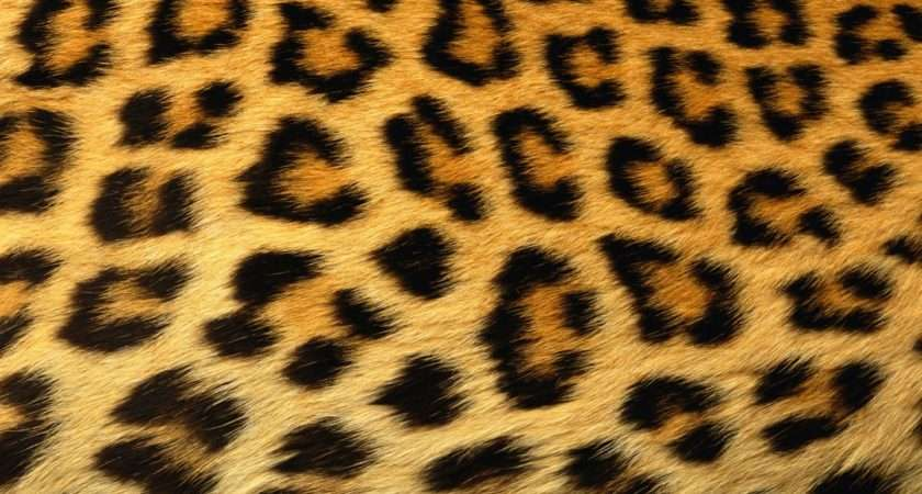 Leopard Spots Actually Clusters Black Brown Look