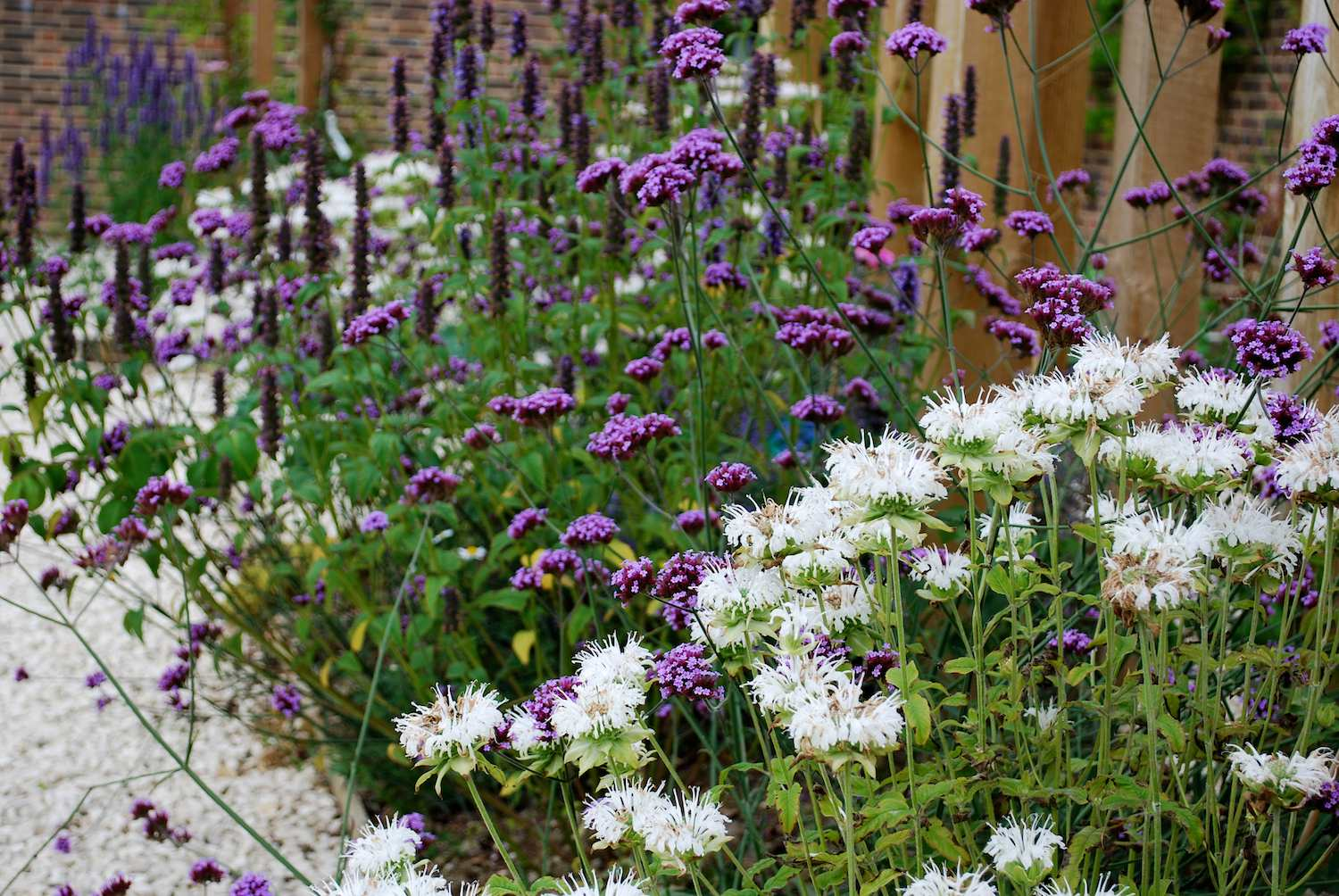 Many Herbaceous Borders Beds Have Other Types Perennials Them
