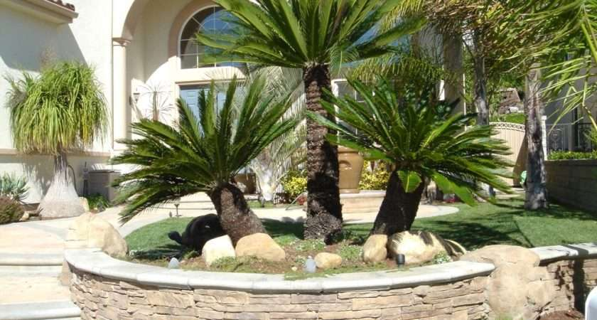 Nice Garden House Design Tropical Palm Trees Stacked Stone