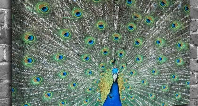 Peacock Themed Bedroom Wall Art Indian Peafowl Nature Canvas