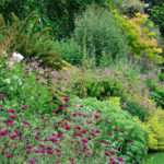 Plant Herbaceous Perennial Border David Domoney