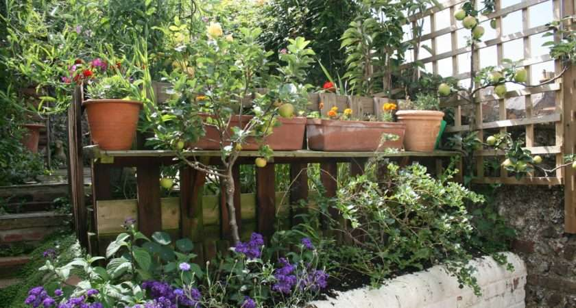 Small Lewes Town Garden Becomes Jungle