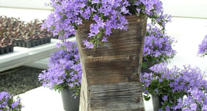 Top Flowering Plants Hanging Baskets