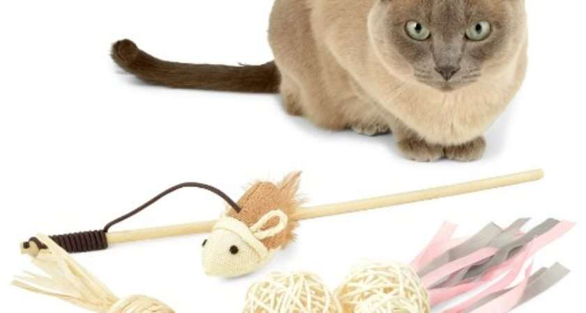 Toy Best Pack Cats Your Kitten Great Toys