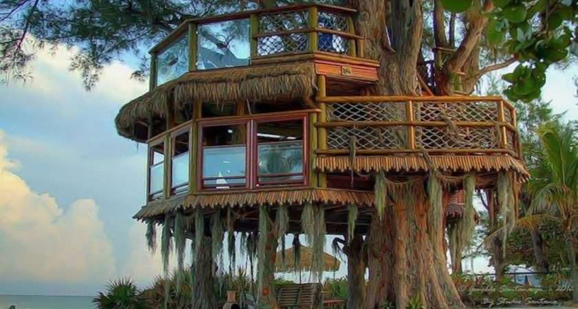 Tree House Cave