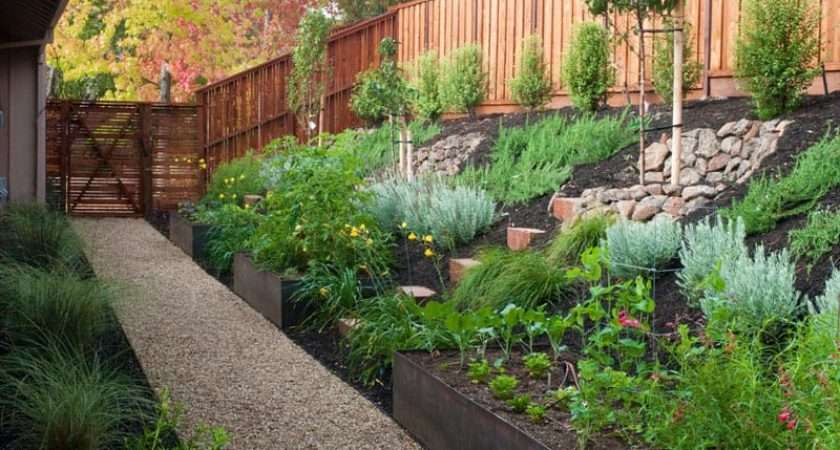 Turn Steep Backyard Into Terraced Garden