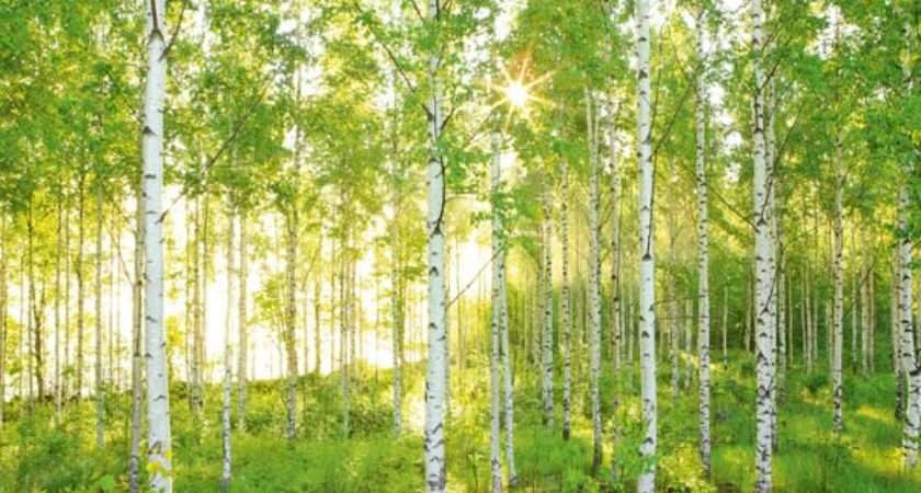 Wall Mural Sunny Forest Scene Green