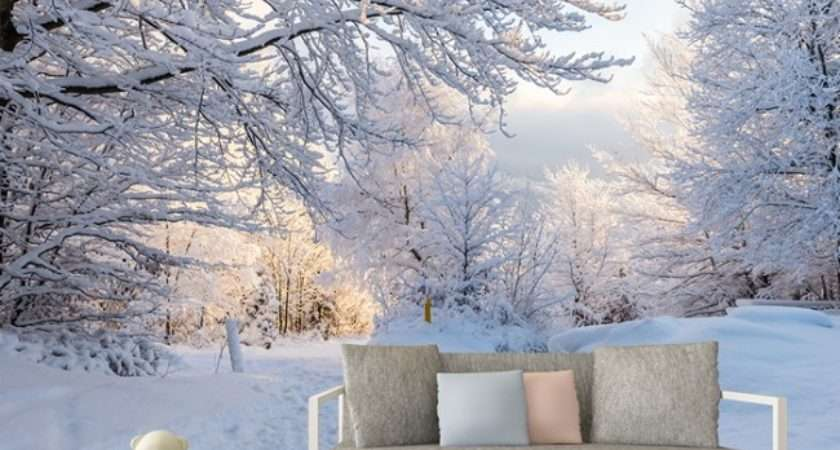 Winter Woods Wall Mural White Trees Forest