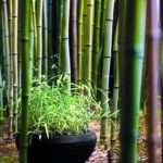 Yes Bamboo Garden Home Important Design